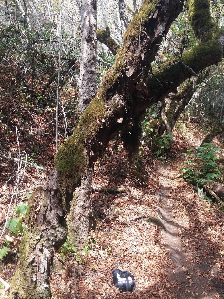 TreeMossSmall